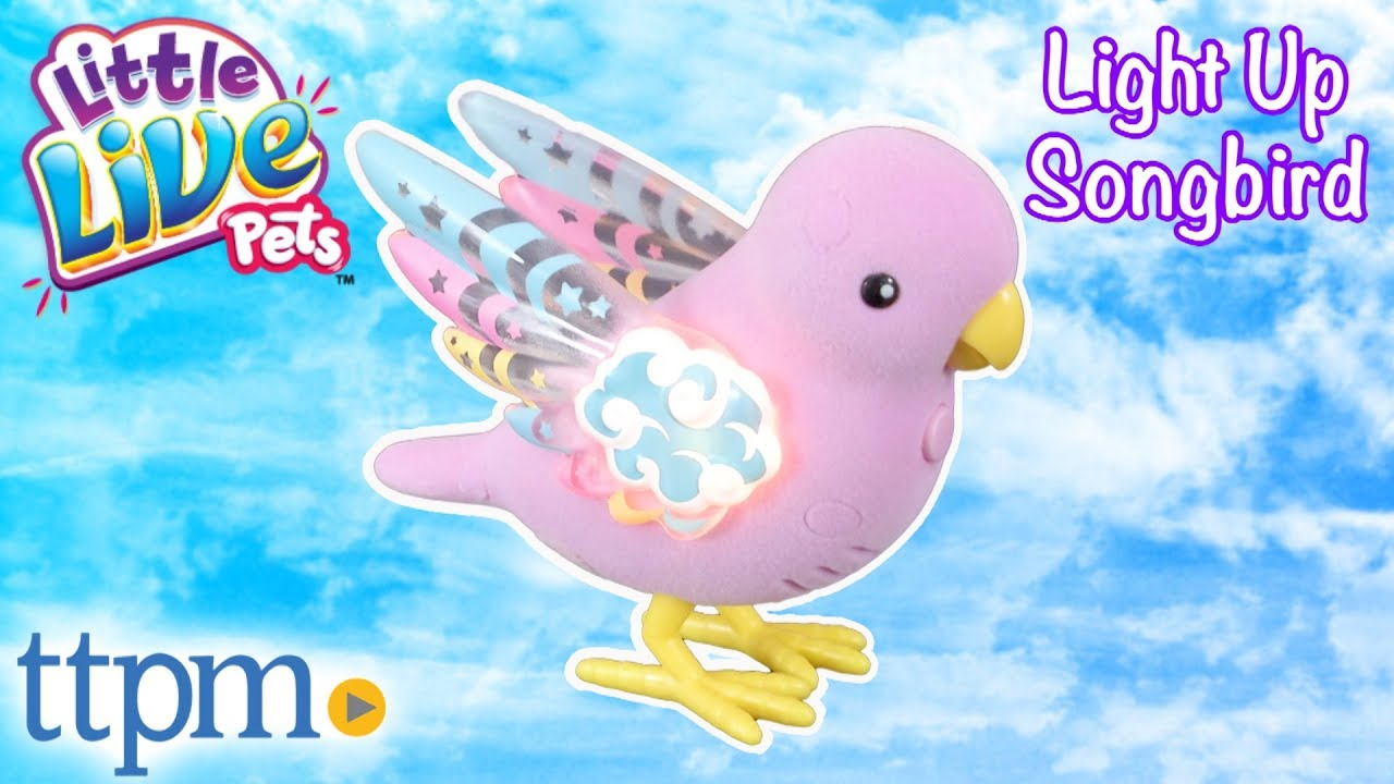 Little Live Pets Light Up Songbirds from Moose Toys - YouTube 5cf234612