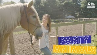 Grandpa Waffles The Rescue Horse Gets SPOILED For His Rescue Anniversary Party Animals