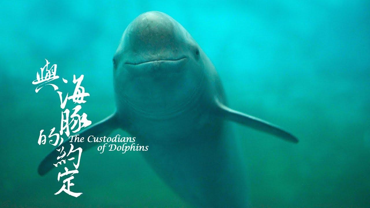 公視4K紀錄片《與海豚的約定》幕後花絮:江豚篇 - YouTube