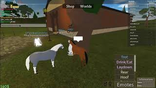 ROBLOX horse wolrd: I turned a two horse on the VDD