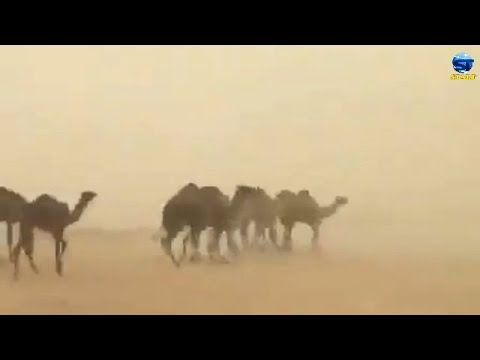 عاصفة بردية رهيبة تضرب شمال السعودية ، غرب سكاكا العيص