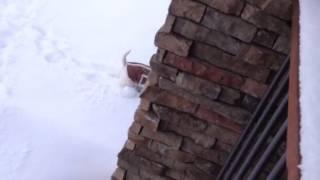 Westie In Feb 2014 Snow