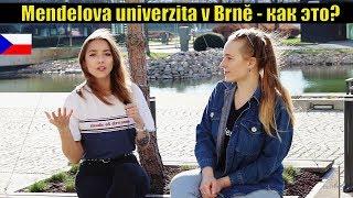 Высшее образование в Чехии #1 | университет Менделя в Брно MENDELU