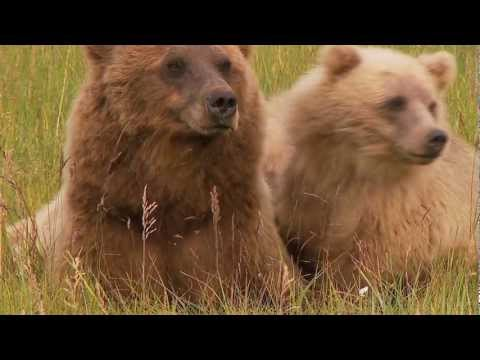 Daytrippin BEAR VIEWING Silver Salmon Creek
