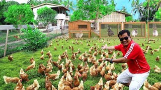 You won't believe this! I Live with HUNDREDS OF CHICKENS,60 Bunnies,9 puppies & 10+ turkey (Feeding)