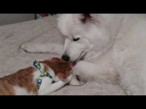 Puppy and Kitten are Best Friends