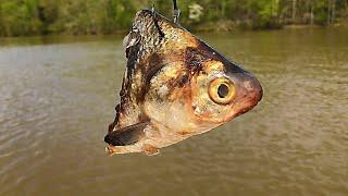 Five Lies About Catfish Bait