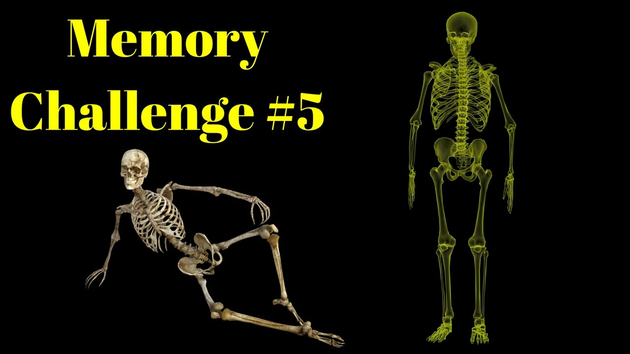 Memory Challenge 5 Memorize All The Bones In The Human Body Youtube