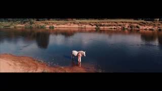 Основной клип белая лошадь