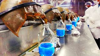 10 MOST Expensive Liquids on Earth 2020