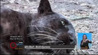 รู้จักเสือดำ สัตว์ป่าคุ้มครอง
