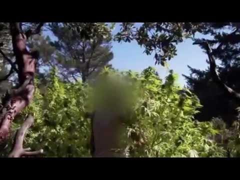 Marijuana Nation - (DOCUMENTARY) FULL