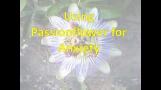 Use Passionflower for Anxiety