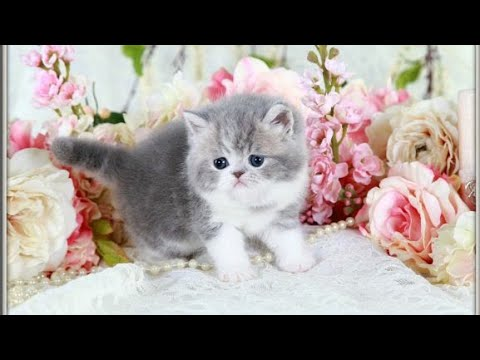 Image of: Kitten downloadcute Cat Funny Video 2018 1 Playing Funny Cat Whatsapp Status Cool Cute Whatsapp Status Litlepups Downloadcute Cat Funny Video 2018 1 Playing Funny Cat Whatsapp