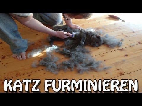 """""""KATZ FURMINIEREN"""" ...schnell noch machen bevor der Sommer kommt !!!"""