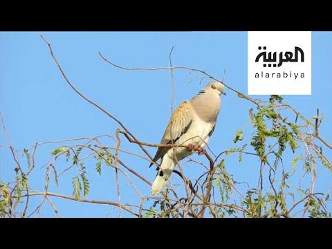 صباح العربية | سعودي يوثق طيور السعودية في كتاب مجاني  - نشر قبل 4 ساعة