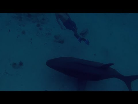 Curacao Vacation Video