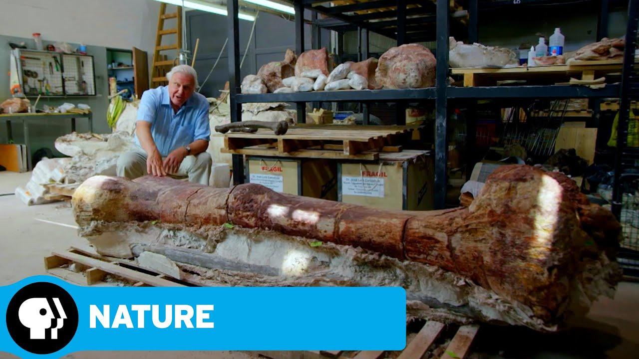 NATURE: RAISING THE DINOSAUR GIANT | David Attenborough & Dinosaur Thighbone | PBS
