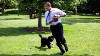 A fluffy farewell to Bo Obama