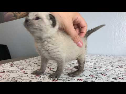 SO CUTE: Kittens Learning to Walk!