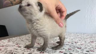SO CUTE: Kittens Learning to Walk!