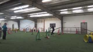 Pomeranian-mix In Dog Agility Handling Class (4th Of 7)
