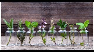 12 Волшебных Трав, которые можно выращивать в Обычной Банке с водой
