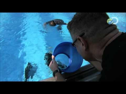 Surviving the Cut - One Man Confidence Swim | Special Forces Diver