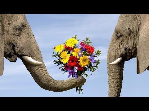 Какие ЦВЕТЫ нельзя дарить | Какие цветы нельзя дарить ЖЕНЩИНАМ | Правила составления БУКЕТОВ