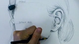 How to Draw Ears