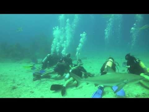 Shark Dive - June 23, 2011 - Ocean Explorers Dive Center