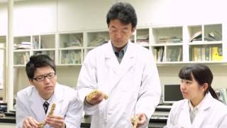 日本大学生物資源科学部 教員紹介(国際地域開発学科)