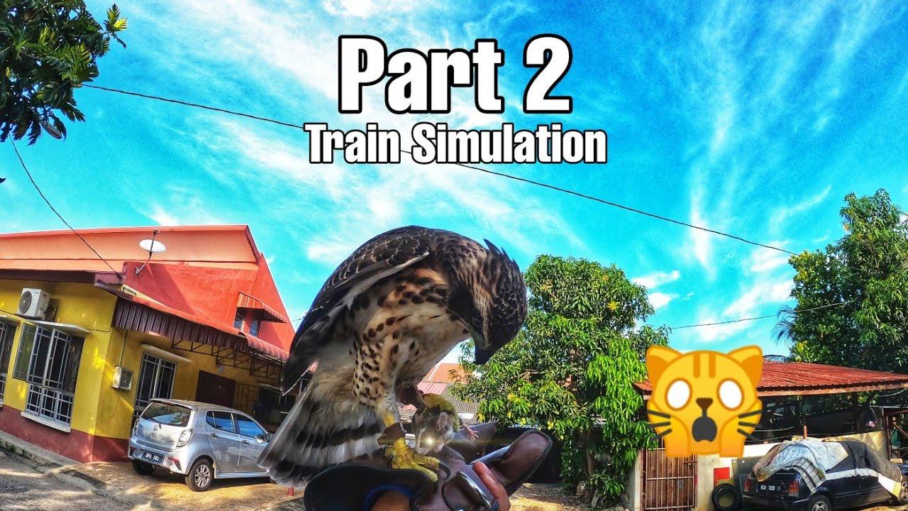 Crested Goshawk Cg Melatih Simulation Part 2 Youtube