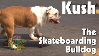 Kush the Skateboarding Bulldog at Truck-a-palooza | WTIU | PBS