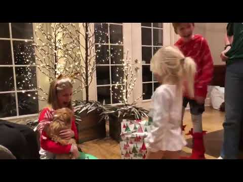 Buddha Ratt - CUTE VIDEO: Watch a girl cry after getting a puppy for Christmas