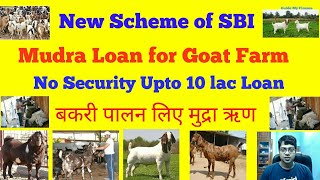 How to Get 10 Lacs Security free loan for Goat Farm | SBI Mudra Allied Agri  For Goat Farm
