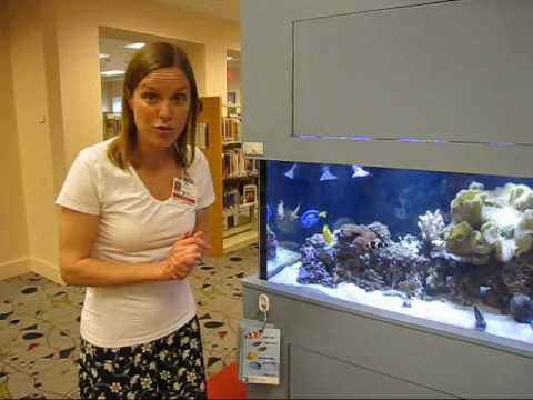 LeAnn Tells The Story Of The Escape Of The Blue Spot Jawfish