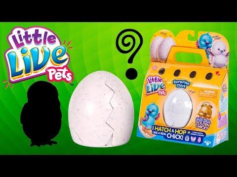 Распаковка и Обзор Little Live Pets Chick - Цыпленок в яйце