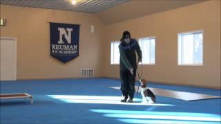 Maggie (beagle) Dog Training Video Minneapolis