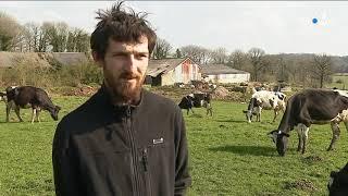L'électricité ferait-elle mourir des vaches en centre-Bretagne ?