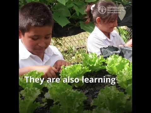 Sustainable schools initiative