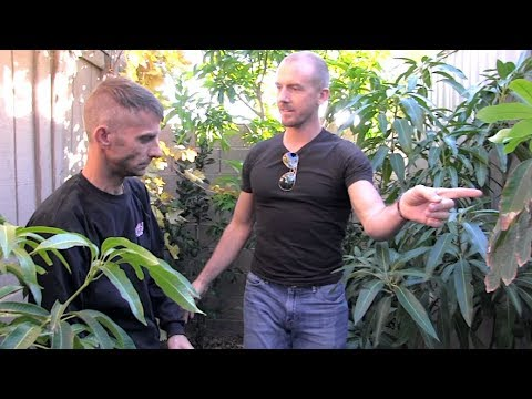 1 Weird Trick To Get IRON Into Your GARDEN & FRUIT TREES!