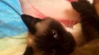 Кошка начала разговаривать...