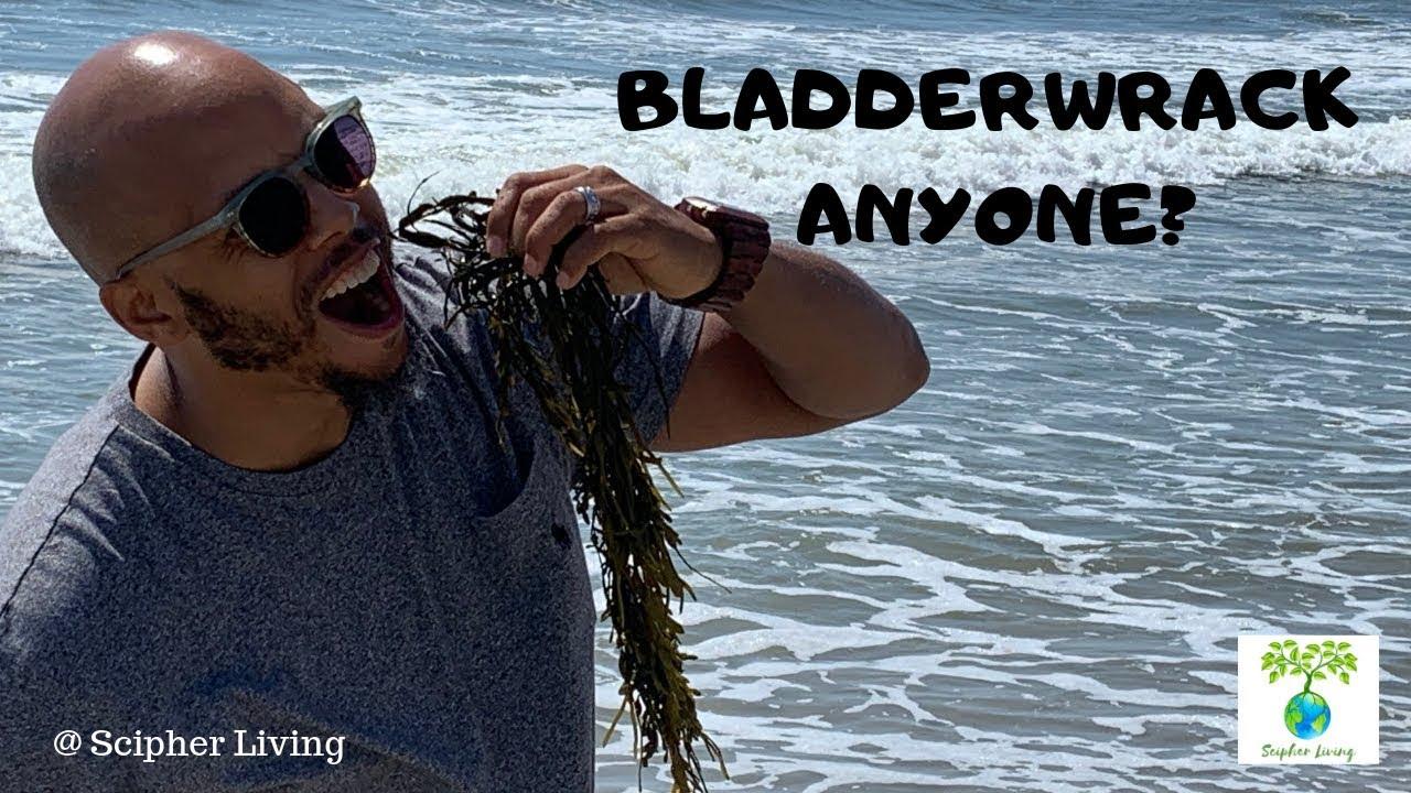 Bladderwrack Anyone? | DR. SEBI APPROVED