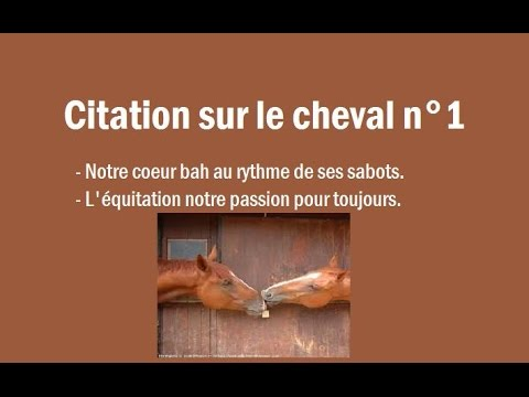 citation sur le cheval n 1 youtube. Black Bedroom Furniture Sets. Home Design Ideas