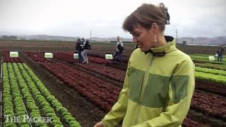 Enza Zaden Showcases Lettuce Vegetable Varieties
