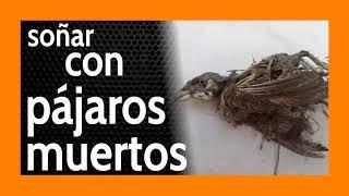 Soñar con Pájaros Muertos 🐦 Mucho negativo por aquí...