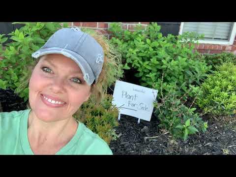 Help! My Plant Is Too Big // Favorite Hobby Gardener