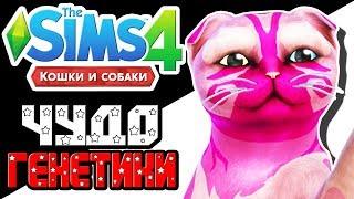 The Sims 4 Challenge | Чудо генетики | Котенок