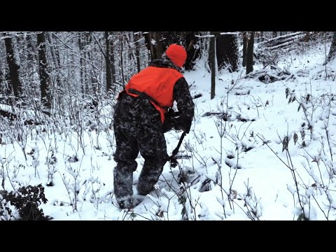Public Land Still Hunting Tips For Deer In Hardwoods